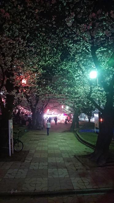 201803桜.JPG